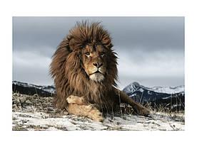 Картина на склі Signal Лев LION120