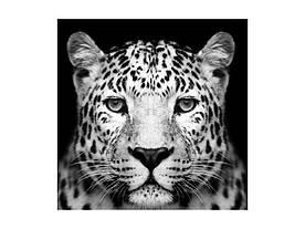Картина на склі Signal Пантера PANTHER80