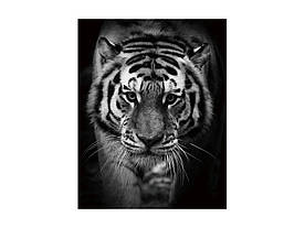 Картина на стекле Signal Тигр