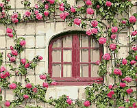 Картина по номерам Brushme Розовые цветы