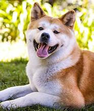 Home Food преміум для дорослих собак середніх та великих порід