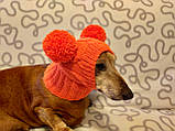 Шапка для собаки с двумя помпонами одежда для собак, фото 6