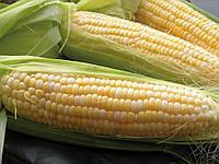 Насіння кукурудзи Галатея ФАО 260
