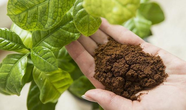 Использование кофейной гущи как удобрение для растений