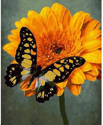 """Картина за номерами Rainbow Art """"Жовтий махаон"""", 40*50см, GX30138, фото 2"""