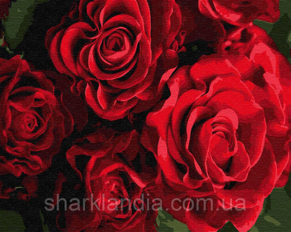 Бутоны красных роз 40*50см Brushme Картина по номерам