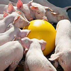 Антистрессовый мяч для свиней
