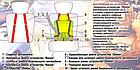 ОПТ ОПТ Дитяче автокрісло з підголовником mix color від 9 до 36 кг, фото 3