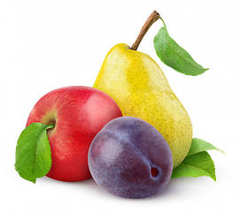 Саджанці плодових дерев та кущів