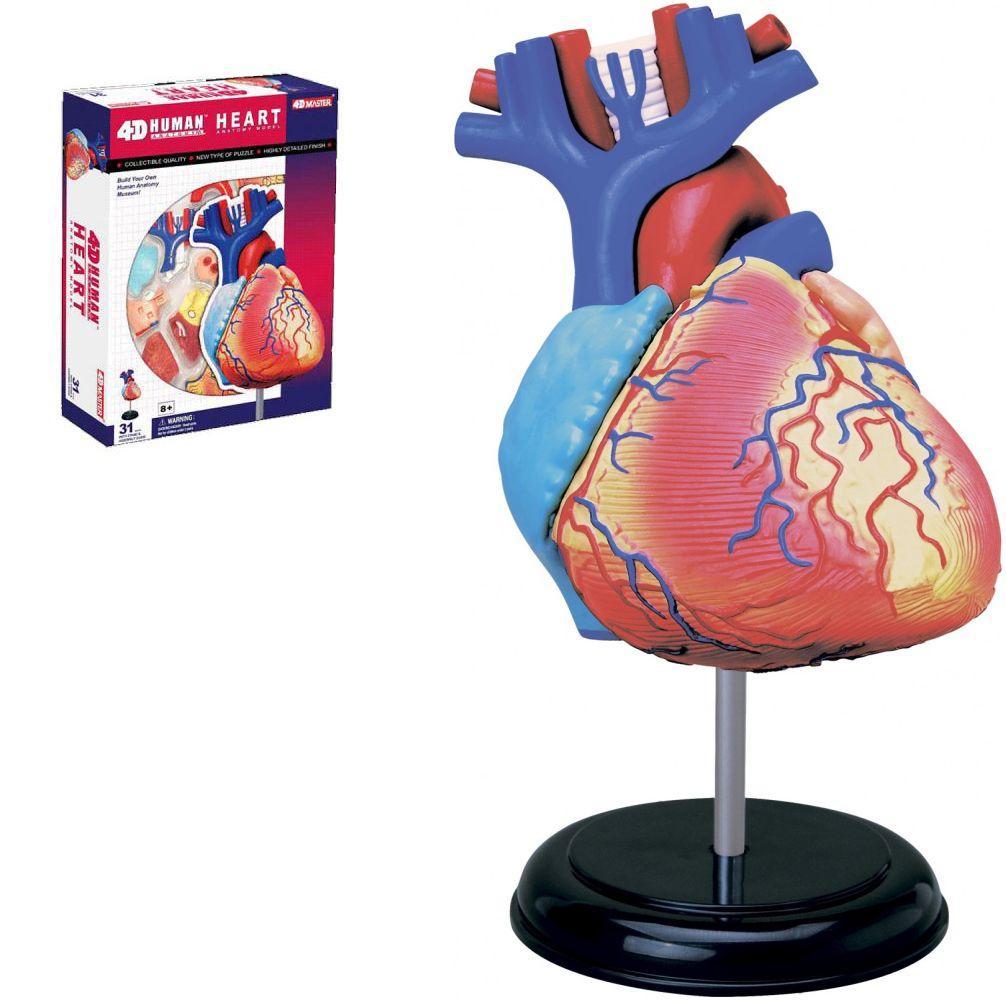"""Анатомическая модель, (4D пазл) """"Сердце"""" Б019у"""
