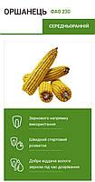Среднеранние семена кукурузы ОРШАНЕЦ ФАО 230 от МАИС (Черкассы)