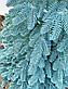 Елка Искусственная литая Премиум 2.1 м Голубая. Ялинка лита (как настоящая), фото 4