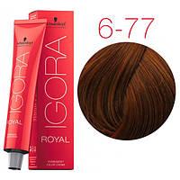 Перманентная крем-краска IGORA ROYAL Reds, Schwarzkopf Professional 60 мл 6-77 Темно-русый медный экстра