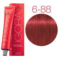 Перманентная крем-краска IGORA ROYAL Reds, Schwarzkopf Professional 60 мл 6-88 Темно-русый красный экстра