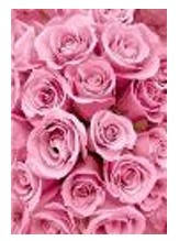 """Картина по номерам """"Море из роз"""" 40*50см,крас.-акрил,кисть-3шт в коробке, фото 2"""