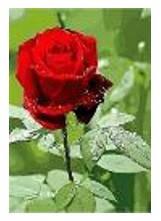 """Картина за номерами """"Троянда"""" 40*50см,крас.-акрил,кисть-3шт в коробці, фото 2"""