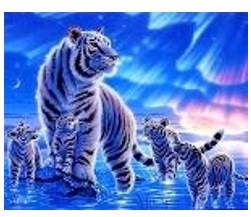 """Картина по номерам """"Тигры-Северное сияние"""" 40*50см,крас.-акрил,кисть-3шт.в коробке"""
