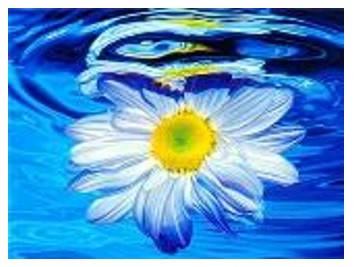 """Картина за номерами """"Ромашка у воді"""" 40*50см,крас.-акрил,кисть-3шт в коробці, фото 2"""