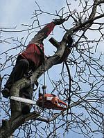 Обрезка деревьев в Днепропетровске