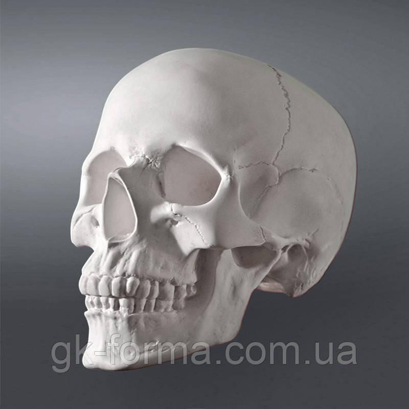 Модель черепа человека. Череп из гипса в натуральную величину, наглядное пособие, предмет интерьера