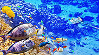 Картина Рыбки на натуральном дереве Артприз 30х50см (КДЖР30504), фото 1