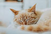 Картина Спящий котенок на натуральном холсте Артприз 30х20см (ЖК30202), фото 1