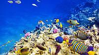 Картина Подводный мир на натуральном холсте Артприз 30х50см (ЖР30505), фото 1
