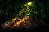 Картина Утренний лес на натуральном холсте Артприз 30х20см (ПЛ3020/10), фото 1
