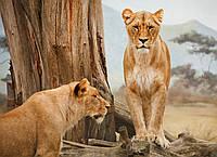 Картина Львицы на натуральном дереве Артприз 40х50см (КДДКШ2/4050/75), фото 1