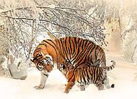 Картина Тигрица с тигренком на натуральном дереве Артприз 30х50см (КДДКШ8/3050/81), фото 1