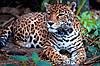 Картина Леопард 1 на натуральном дереве Артприз 30х40см (КДДКШ15/3040/88)