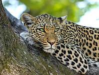 Картина Леопард на дереве 3 на натуральном дереве Артприз 30х50см (КДДКШ19/3050/92), фото 1