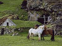 Картина Лошади в горах на натуральном дереве Артприз 20х30см (КДЛШ5/2030/132), фото 1