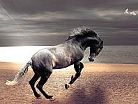 Картина Лошадь свобода 2 на натуральном дереве Артприз 40х60см (КДЛШ2/4060/129), фото 1