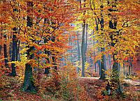 Картина Осень в лесу на натуральном дереве Артприз 20х30см (КДЛ2/2030/136), фото 1