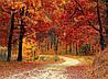 Картина Красивый осенний лес на натуральном дереве Артприз 30х50см (КДЛ4/3050/138)