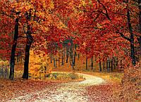 Картина Красивый осенний лес на натуральном дереве Артприз 40х60см (КДЛ4/4060/138)