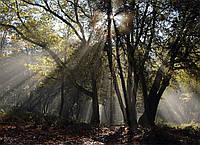 Картина Утро в лесу на натуральном дереве Артприз 40х50см (КДЛ5/4050/139), фото 1