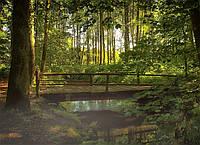 Картина Лесной ручей на натуральном дереве Артприз 30х50см (КДЛ8/3050/142), фото 1