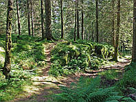 Картина Папоротник в лесу на натуральном дереве Артприз 20х30см (КДЛ11/2030/145), фото 1