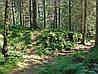 Картина Папоротник в лесу на натуральном дереве Артприз 50х50см (КДЛ11/5050/145)