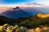 Картина Цветы в горах на натуральном холсте Артприз 30х60см (ГР16/3060/67), фото 1
