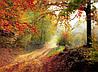Картина Осенняя дорога в лесу на натуральном холсте Артприз 80х90см (Л3/8090/137)