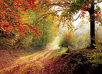 Картина Осенняя дорога в лесу на натуральном холсте Артприз 80х90см (Л3/8090/137), фото 1
