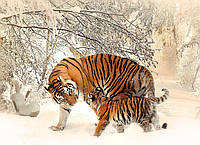 Картина Тигрица с тигренком на натуральном холсте Артприз 40х80см (ДКШ8/4080/81), фото 1