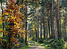 Картина Лесная красота на натуральном холсте Артприз 70х100см (Л6/70100/140)