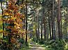 Картина Лесная красота на натуральном холсте Артприз 80х80см (Л6/8080/140)
