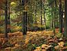 Картина Лесная красота 2 на натуральном холсте Артприз 30х60см (Л7/3060/141)