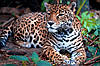 Картина Леопард 1 на натуральном холсте Артприз 30х40см (ДКШ15/3040/88)