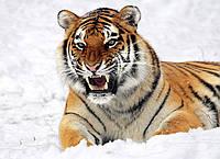 Картина Тигр в снегу на натуральном холсте Артприз 60х90см (ДКШ16/6090/89), фото 1